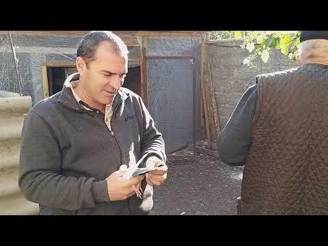#Astrakhan #Pigeon   Голубятники Сурен и Андрей в гостях в Астрахани 12.10.19г