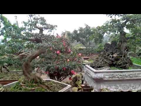 BONSAI - Cay canh nghe thuat 2.mp4