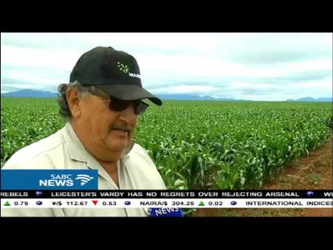 Limpopo Dept of Agriculture raises R8 mil to combat the army worm