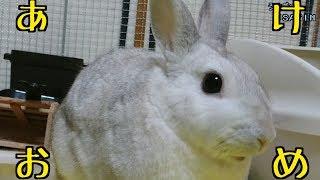 あけましておめでとうございます【うさぎのUSAGIN】Rabbit Queen