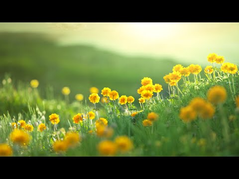 """Beautiful Instrumental Hymns, Peaceful Music,  Piano & Flute """"Blessed Assurance""""  Tim Janis"""