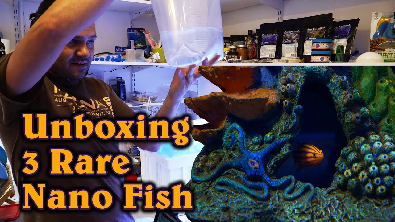 Unboxing 3 Rare Nano Fish from Among The Reef