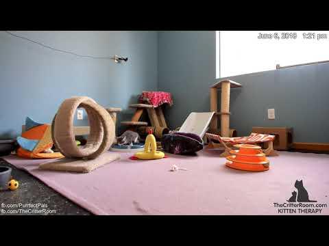 Guardian Kittens - Trash Run Door Dash