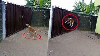 Bahçeye Bir Kamera Koydular ve Köpeklerine Olan Şeyi Görünce Şok Olabilirsin