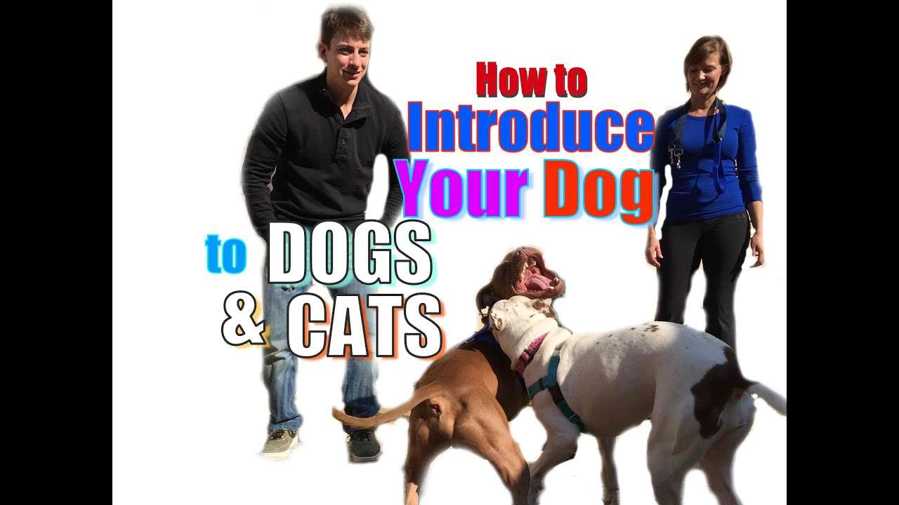 how do dogs hook up