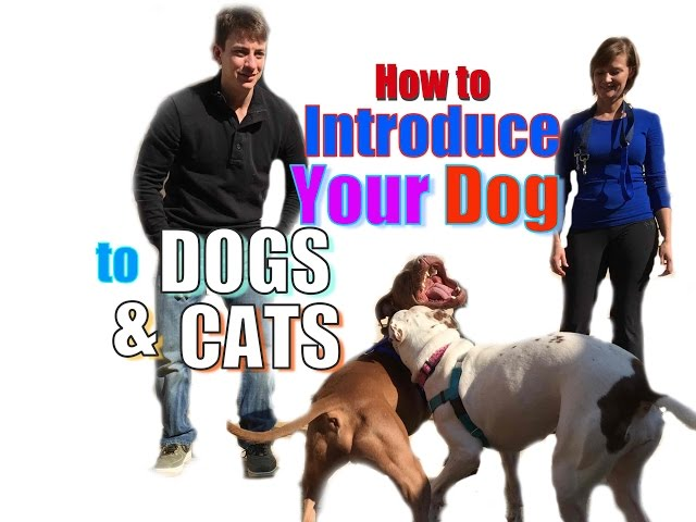How to Introduce a NEW DOG to Your Other Pets