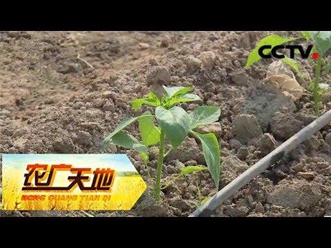 土壤改良技术_《农广天地》 20180115 设施农业中的土壤改良技术 | CCTV农业 - YouTube