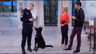 Meet Jett the Police Dog! - Pickler \u0026 Ben