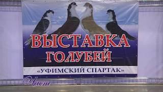 Выставка голубей. Уфа. 09.12.2017. ч.1 Уфимский спартак.