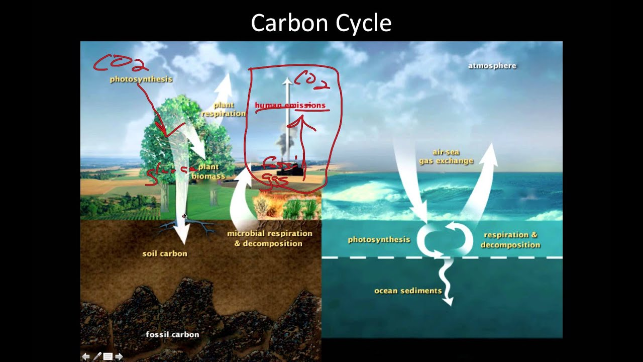 cycles in ecosystem Nutrient cycles in ecosystems nutrient cycles coming soon nitrogen and carbon cycle in an ecosystem the video below illustrates the nitrogen and carbon cycle in an ecosystem.