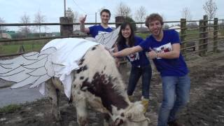 Red Bull CAN you MAKE it : The Chicaengo Bulls   [FRANCE]