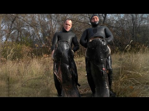 Подводная охота на СОМА - 2 (Spearfishing for catfish)