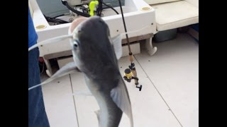 Рыбалка на Гоа!!! Кэтфиш!!!(Рыбалка на Гоа!!! Кэтфиш!!! поимка рыбы кэтфиш.Приходится отстричь иглы у рыбы чтобы не уколоться., 2016-09-08T20:57:43.000Z)