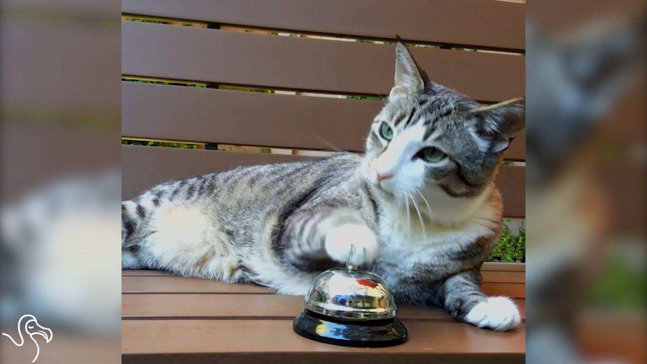 Cat Rings A Bell, Human Brings Treats