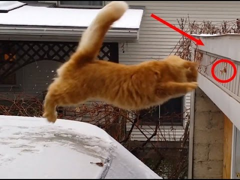 Funny Cat Videos Falling Down The Stairs