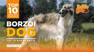 Borzoi  The Borzoi Dog Breed  Top 10 Borzoi Dog Facts from Doggo Love.
