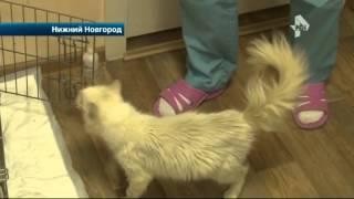В Нижнем Новгороде подросток взрывает кошек петардами