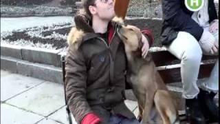 Андрей Сафронов нашел четвероного друга в Черновцах