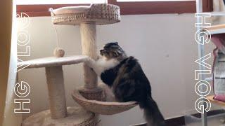 휴학생 VLOG C1# ::고양이랑 놀아주기, 일일집사…
