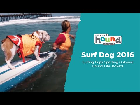 Unleashed Outward Hound Surf Dog 2016