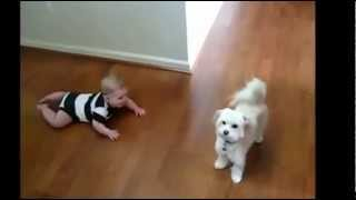 Babies Laughing At Dogs - Funny