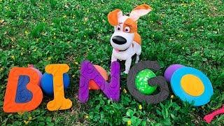 Bingo Nursery Rhymes for kids