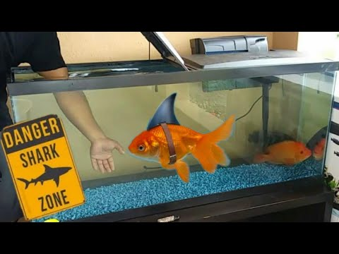 AQUARIUM Pet SHARK FISHING! Shark Week
