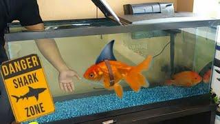 aquarium-pet-shark-fishing-shark-week