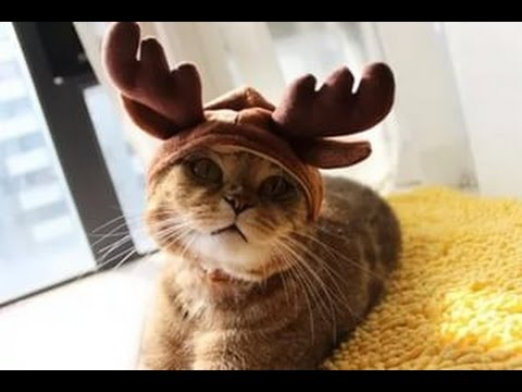 Try Not To Laugh – Funny cat, animal videos Compilation