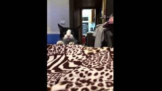Смешной кот в засаде