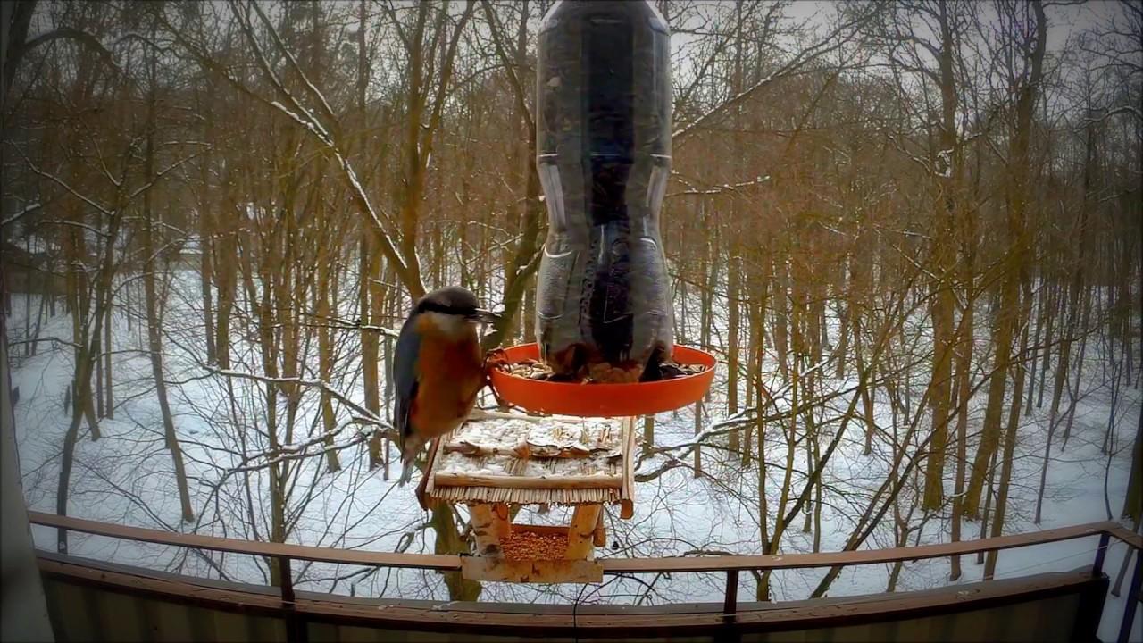 Dokarmianie Ptaków Karmnik Z Butelki Plastikowej