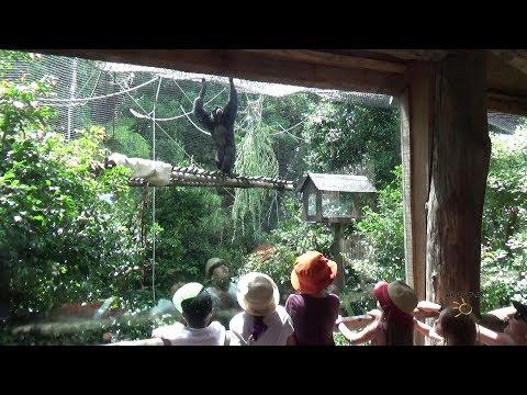 Auckland Zoo December 2017