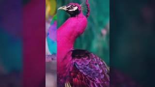 Лучшие фотографии птиц