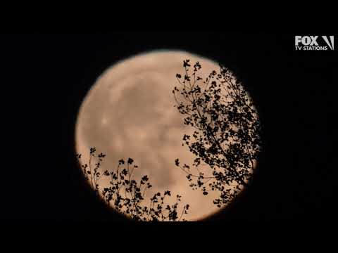 Justin The Web Guy - There Is Going To Be A Full Moon On Friday The 13th? Yes, There Will Be!