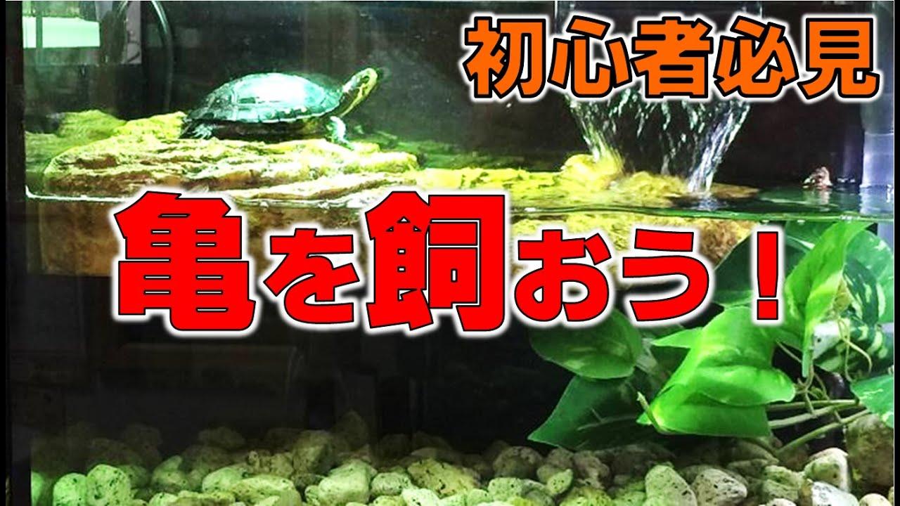 飼育 ミシシッピ アカミミガメ