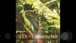 Livro e relógio com o canto de 12 aves brasileiras