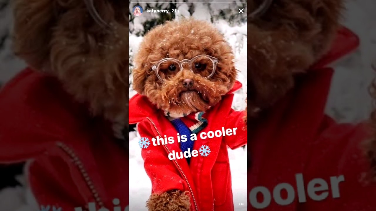 Katy Perry Dresses Up Her Adorable Dog Butters Youtube