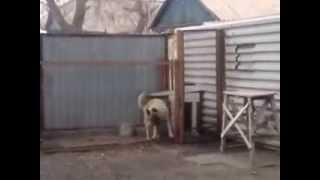 Dog Dancing - Got Some Moves Jamming Out To His Favorite Tune