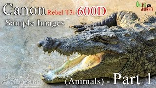 Canon EOS 600D Rebel T3i Photography - Sample Images (Animals) - Part 1