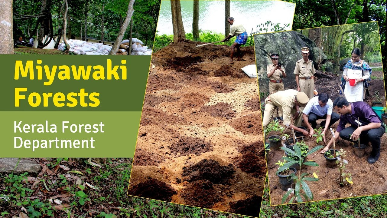 The miyawaki forest method of planting, named for the botanist who developed it, encourages tree communities to grow upward and to share. Miyawaki Forests Developed For Kerala Forest Department Crowd Foresting Youtube