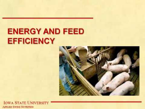 Dr. John Patience - A Critical Look at the Science Underlying Feed Efficiency