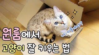 원룸에서 고양이 잘 키울 수 있는 방법 궁금하세요?