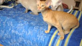Котятам 4 месяца. Помет 3