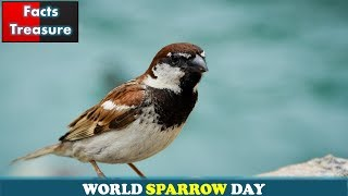 World Sparrow Day 2017