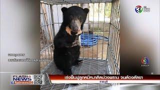 เร่งฟื้นฟูลูกหมีหมาติดบ่วงพราน จนต้องตัดขา   FlashNews   23-02-62   Ch3Thailand