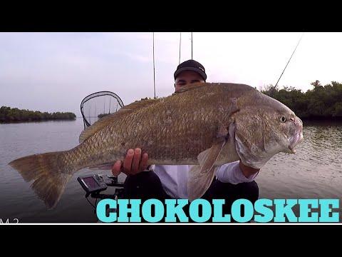 CHOKOLOSKEE ISLAND PARK & MARINA, FISHING!