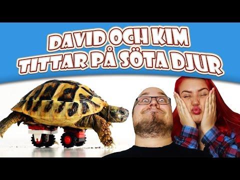 LEGO-SKÖLDPADDA!!! | David och Kim tittar på söta djur
