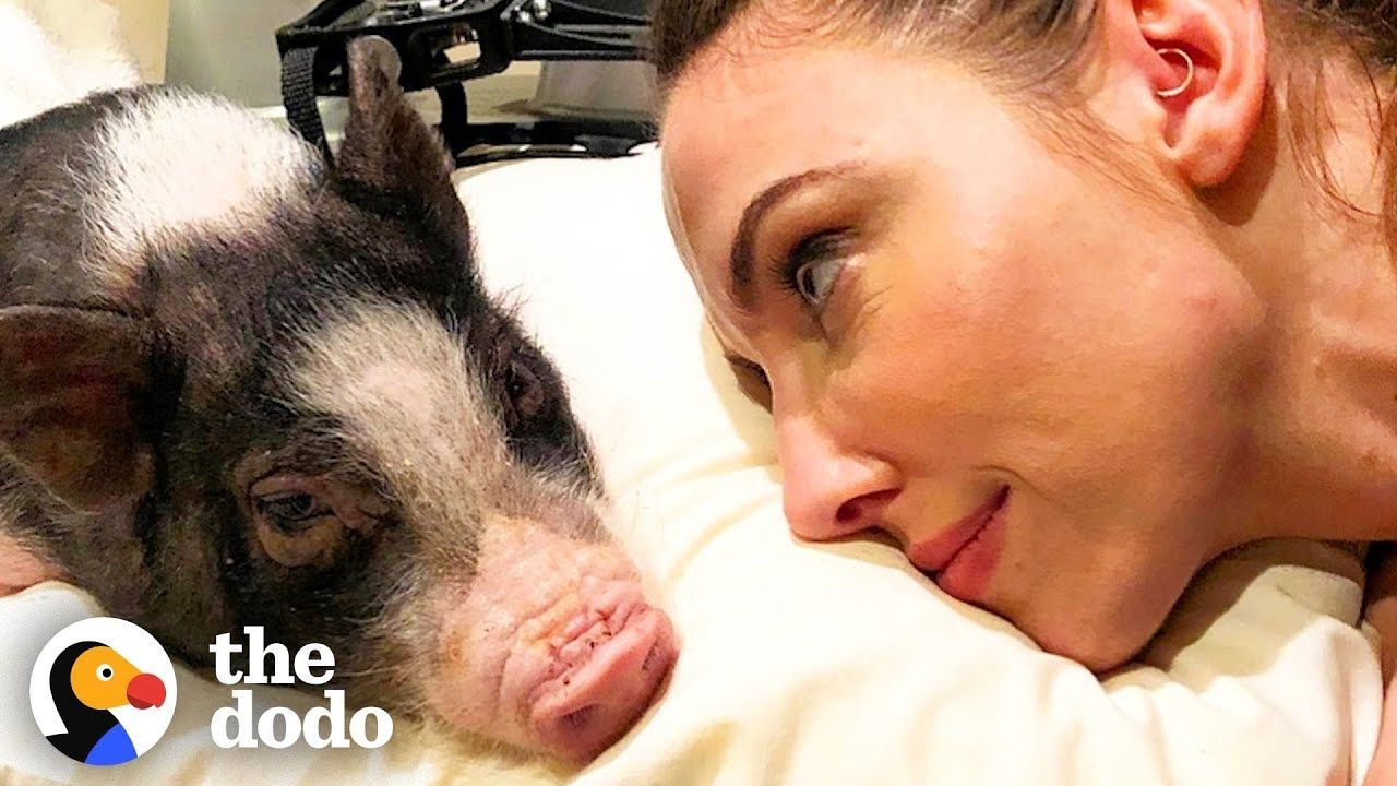 Tiny Pig Rescued by Whitney Cummings Has the Biggest Heart | The Dodo