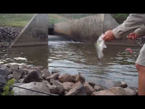 Bass Fishing At Crabtree Lake In Raleigh NC