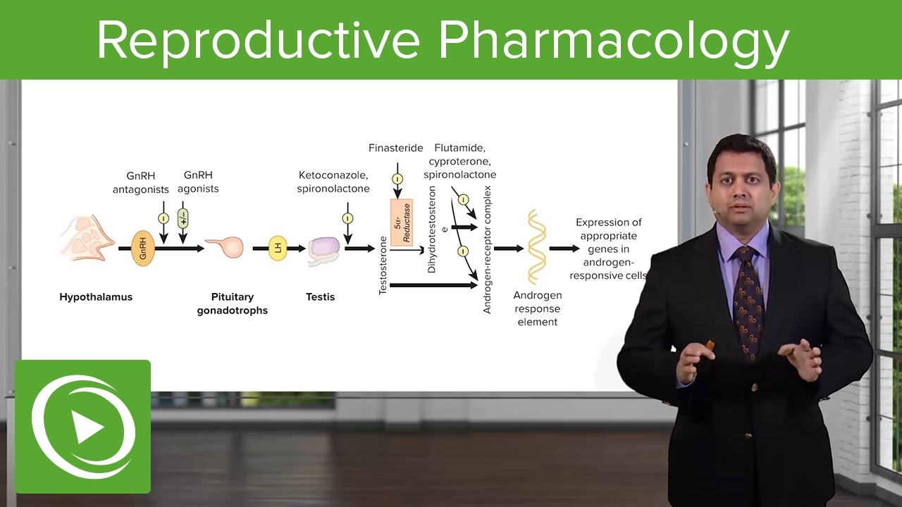 Reproductive Pharmacology: Overview – Pharmacology | Lecturio
